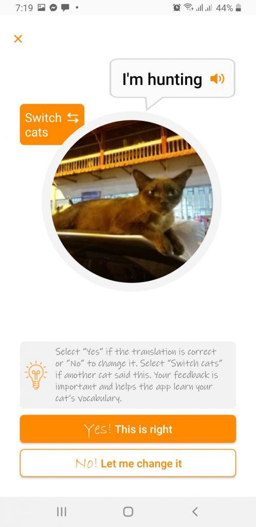 คุยกับแมวด้วยภาษาแมวผ่านแอพ MeowTalk 6