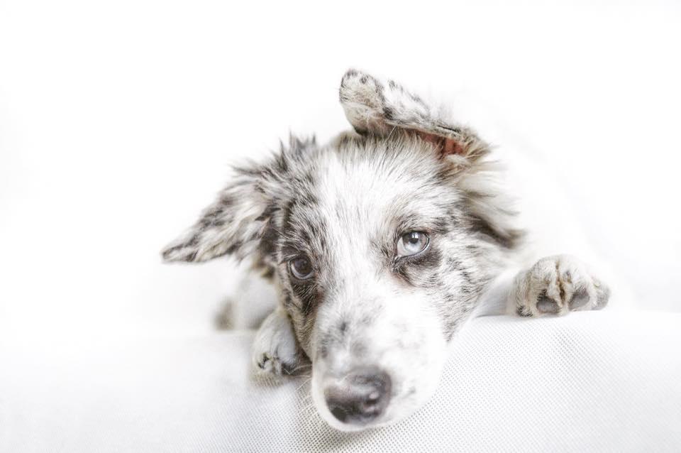 Une image contenant chien, intérieur, blanc, animal Description générée automatiquement