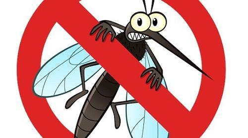 Kết quả hình ảnh cho quy trình diệt muỗi