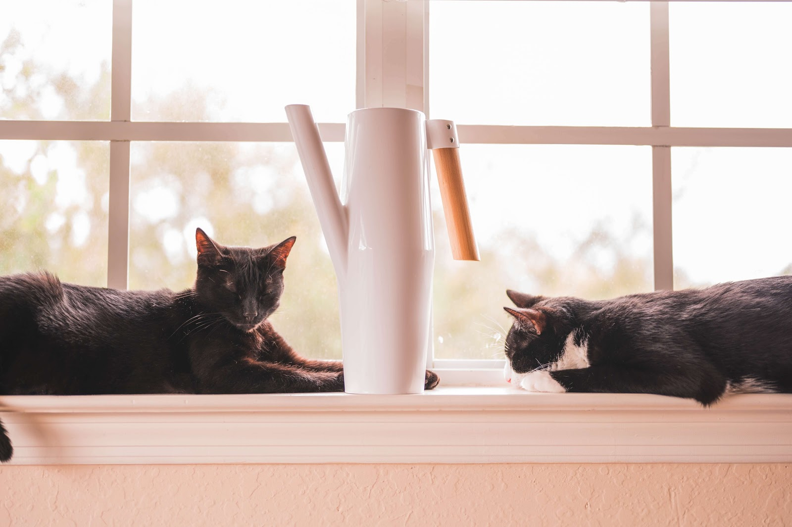 Cat coronavirus, how to keep your cats healthy and safe.