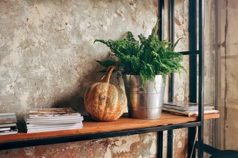 A plant on a shelf.