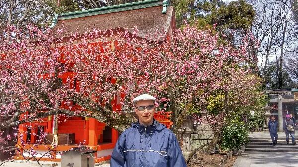 1-Sakura.JPG