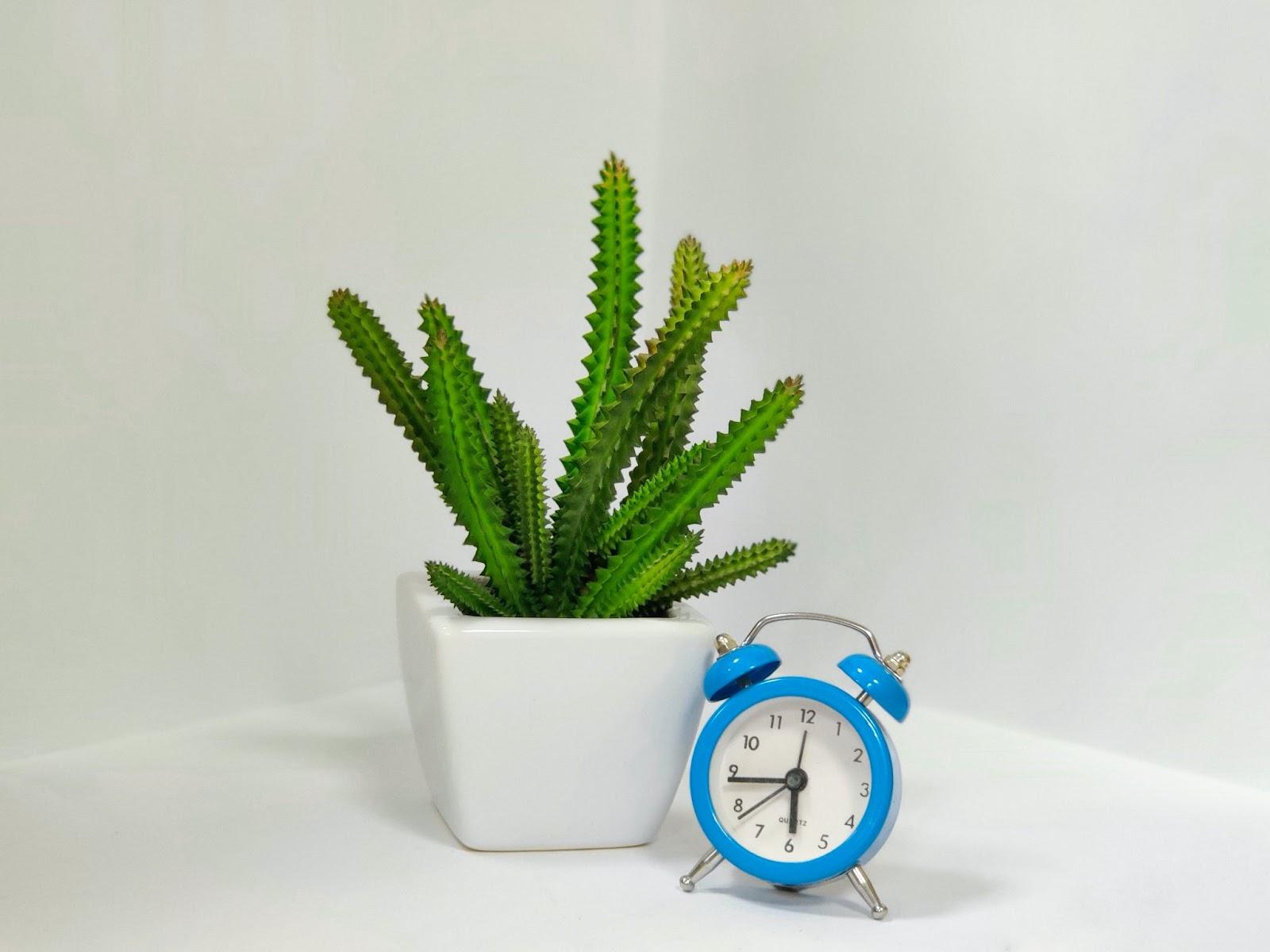 alarm clock and succulent