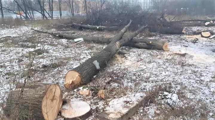 В Москве началась вырубка рощи на Кутузовском проспекте