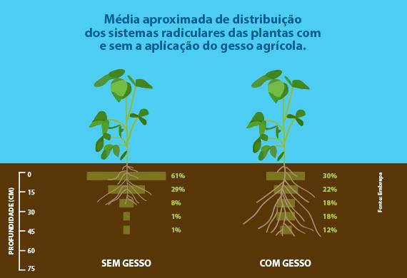 Gessagem e a média aproxima de distribuição dos sistemas radiculares das plantas com e sem aplicação do gesso agrícola.