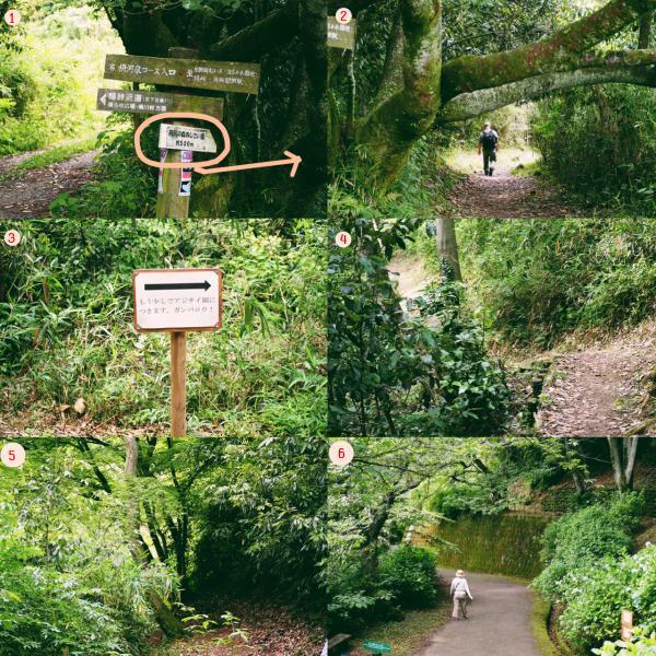 森の中の道  中程度の精度で自動的に生成された説明