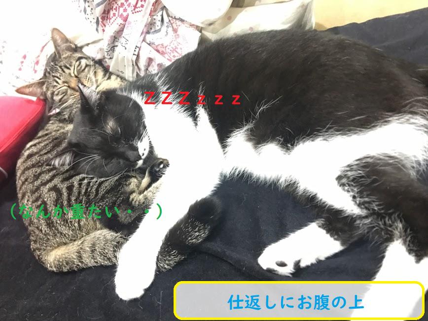 猫は人間の事をどう思ってる?暖かい棒?動く湯たんぽ説も
