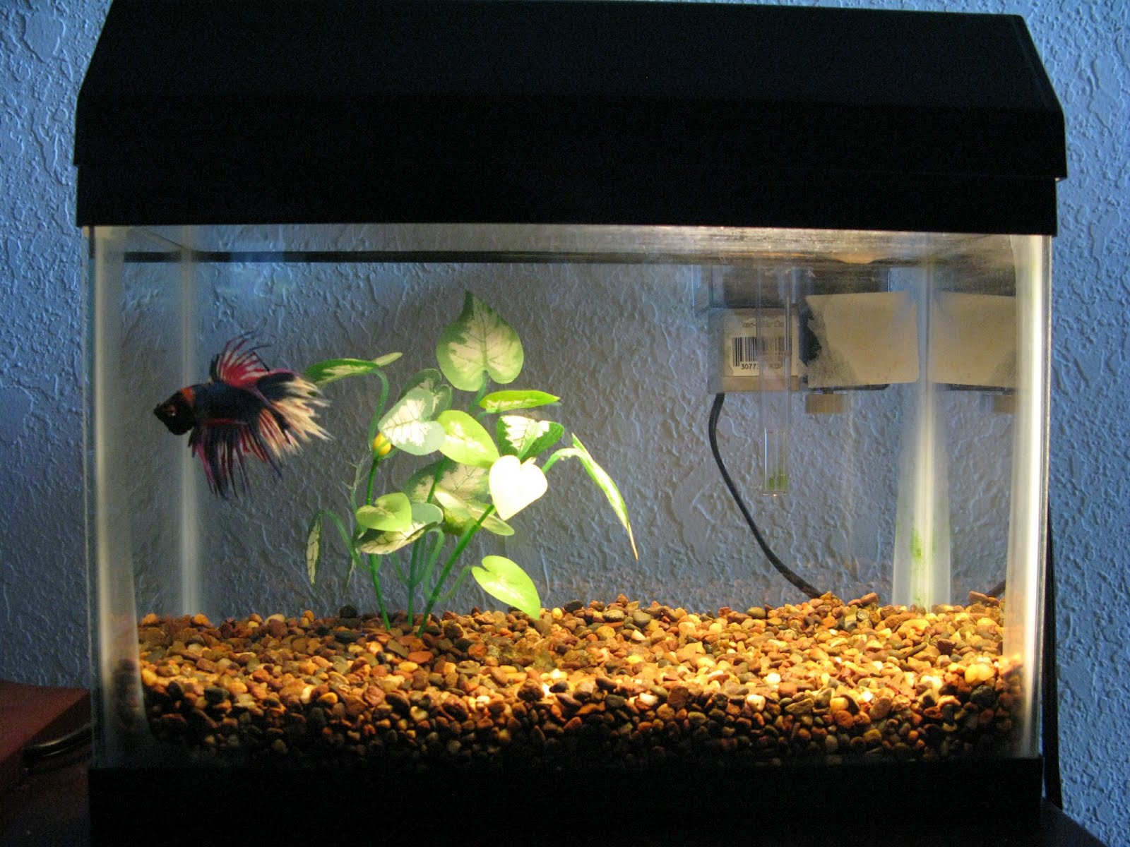 The ecology of the aquarium and how it led me to for How to remove algae from fish tank glass