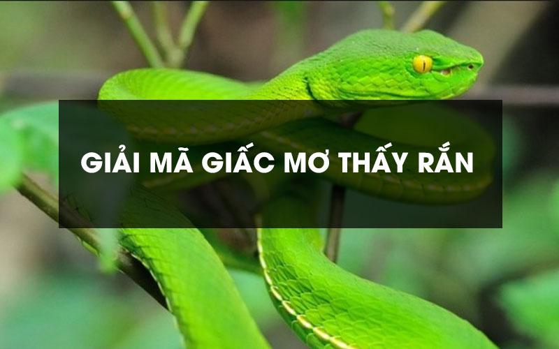 Nằm mơ thấy rắn đánh con gì? Bí ẩn về giấc mơ thấy rắn