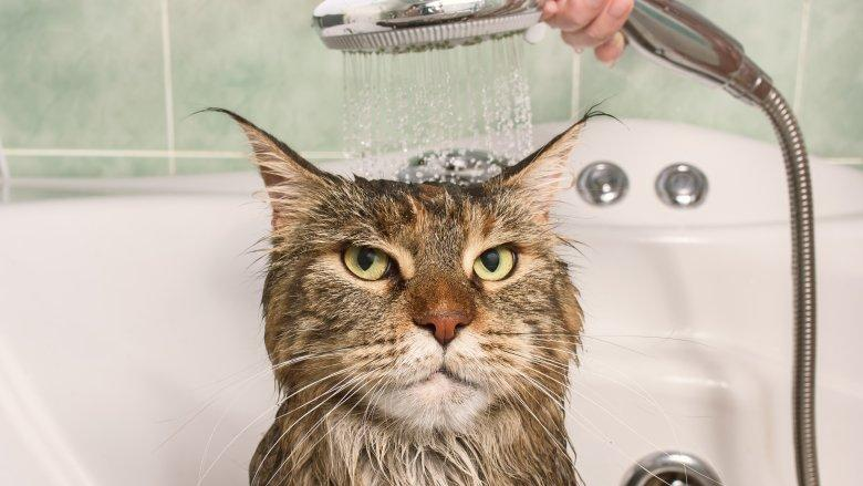 Why do cats hate water so much?
