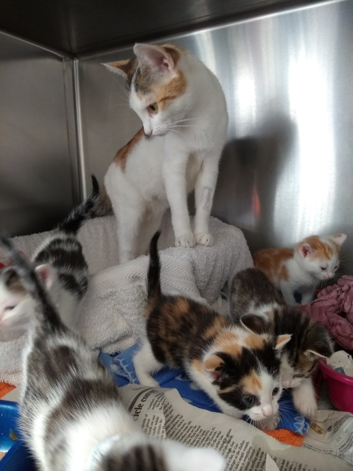 Animal Charities Need Your Help To Prevent A Lockdown Kitten Crisis Quest Media Network Tameside Radio Tameside Reporter Oldham Reporter Glossop Chronicle