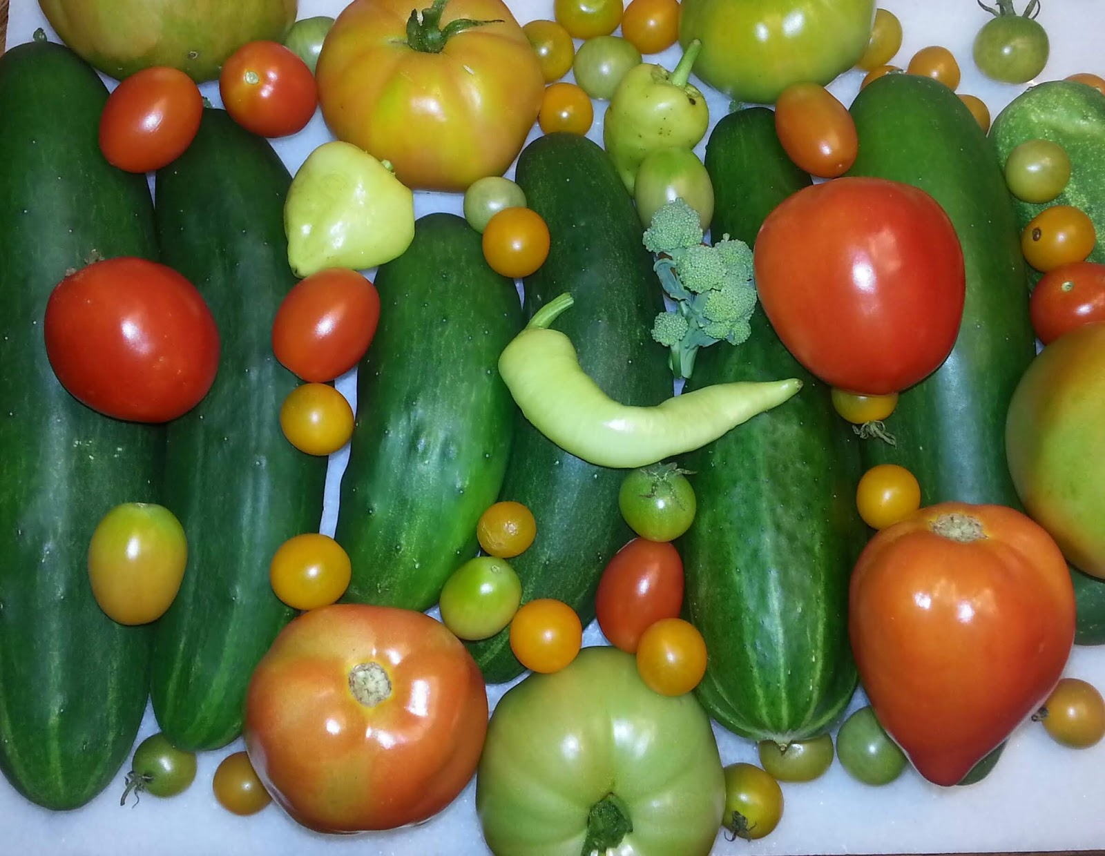gardening harvest haul picture