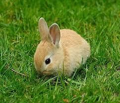 ผลการค้นหารูปภาพสำหรับ กระต่าย