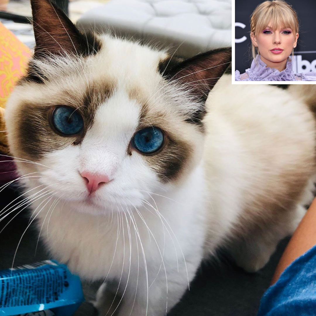 Meet Taylor Swift's Celebrity Cats