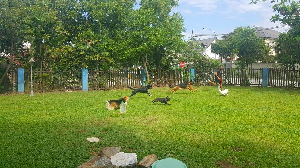 Dog Hotel Dog Boarding Klang Valley