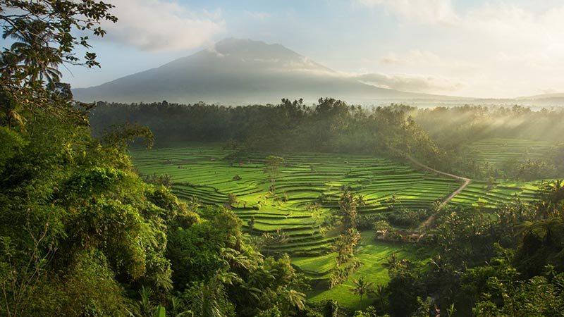 Things to Do in Bali: Sidemen Rice Fields