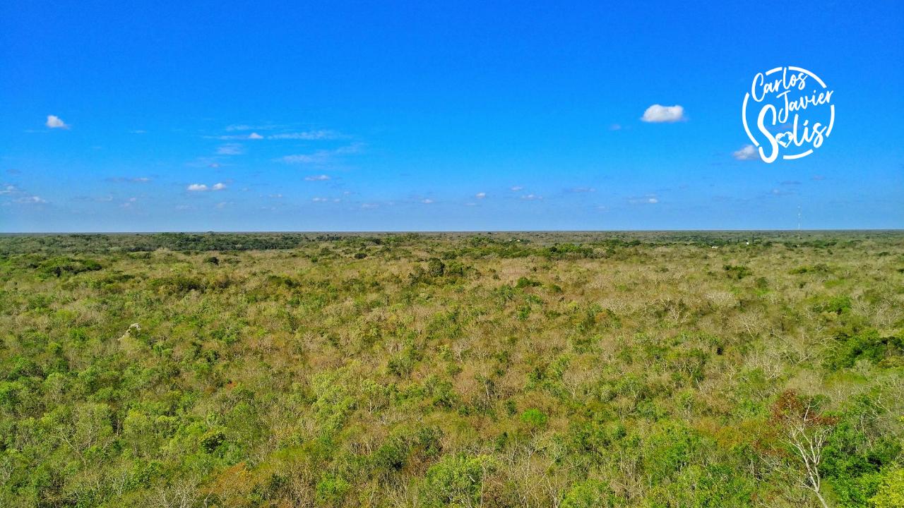 Foto de la jungla vista desde la pirámide de Nohoch Mul, una de las experiencias imprescindibles que vivir en Cancún