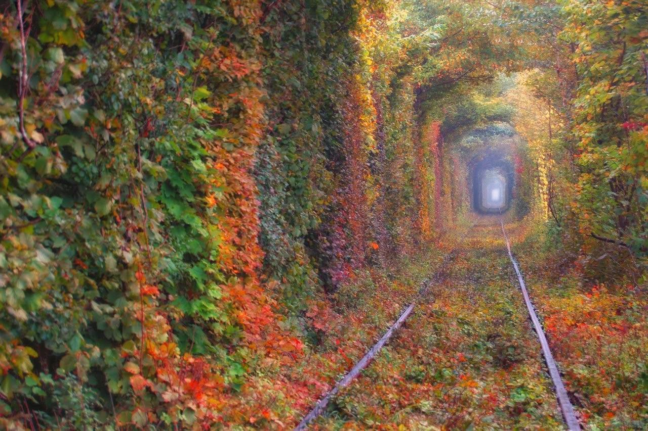 Тунель Кохання з Полтави, InGreen