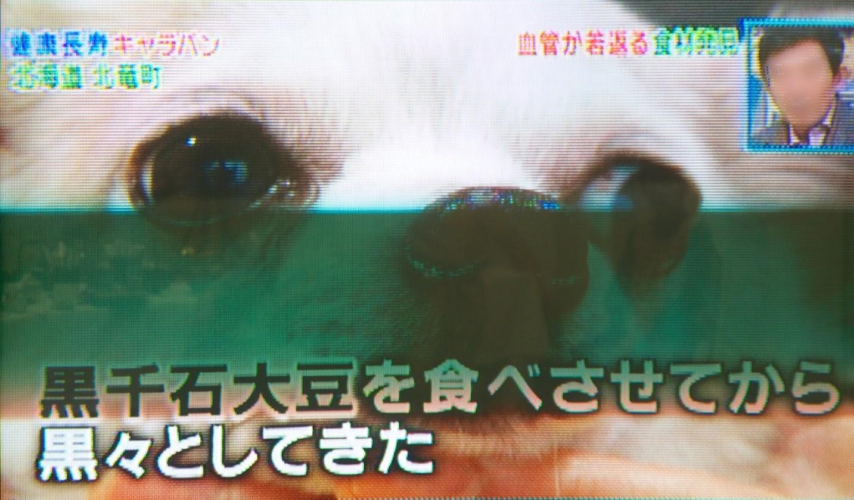 鼻の色や体の手の色が白から黒へ変化