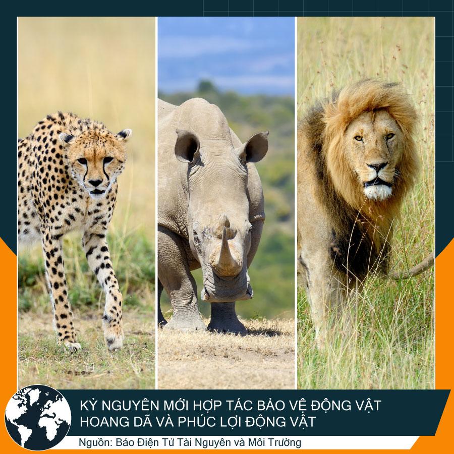 Sư tử, tê giác
