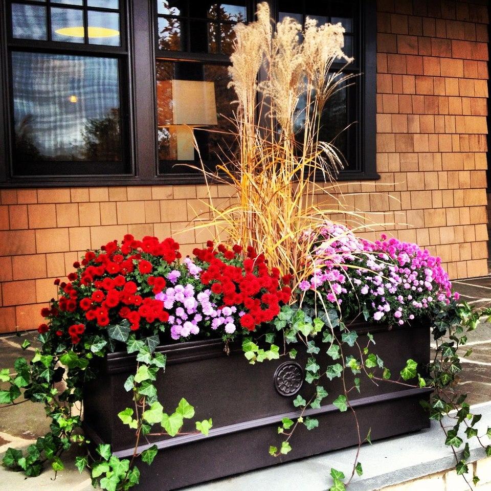 Container Gardening Filler