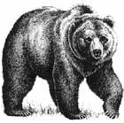 http://www.onaway.org/animal/images/grizzly_bear2.jpg