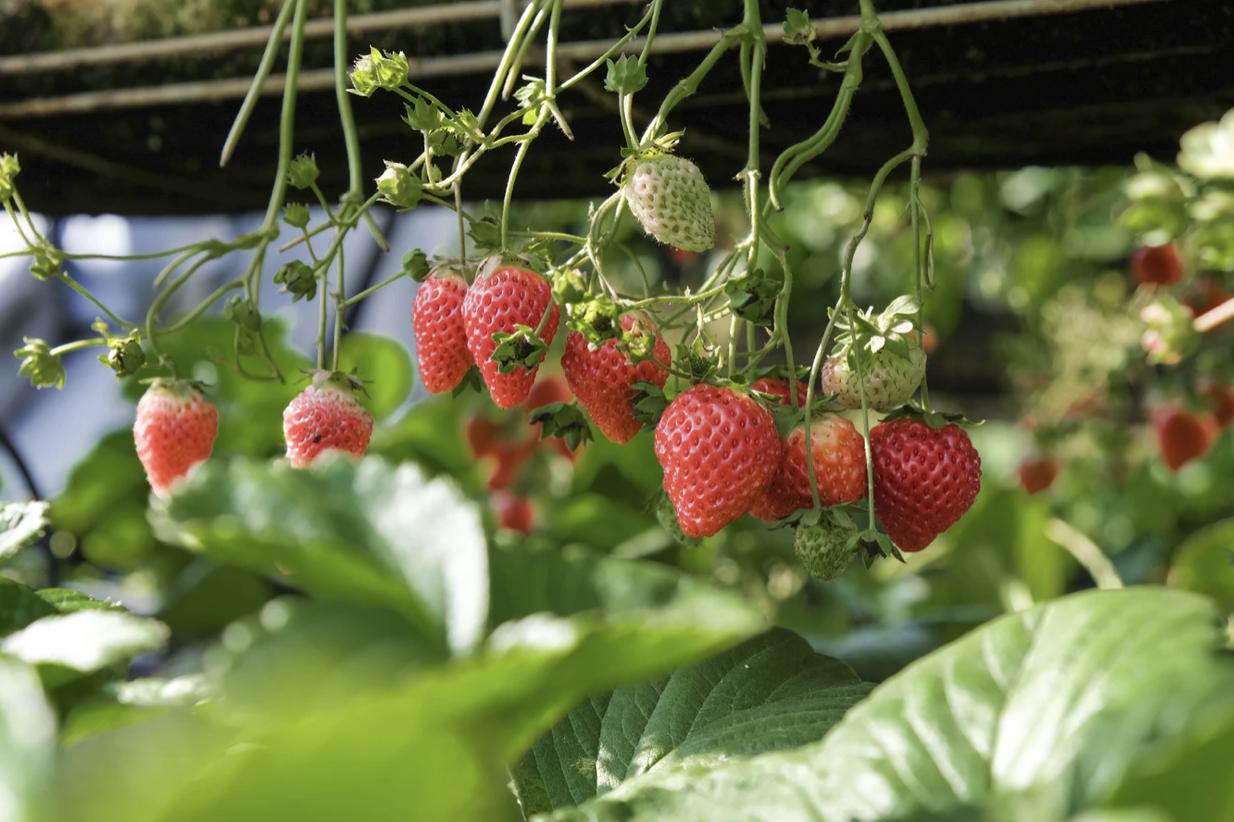 Vegetable gardening guide for beginners