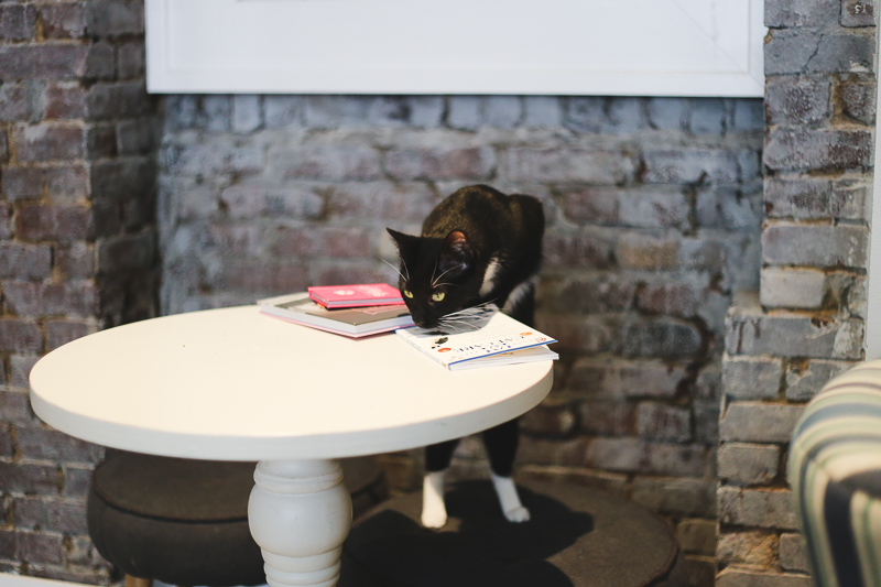 Little Lions Cat Cafe in NYC