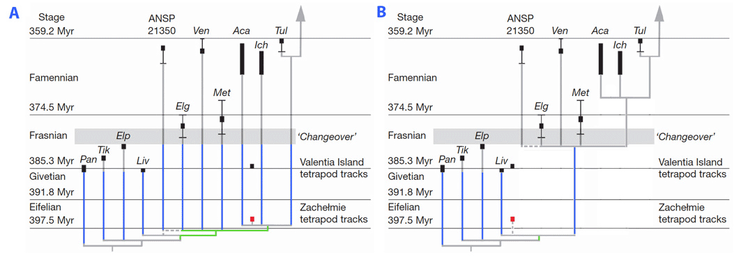 Phylogenetic tree with two possible placements of the Zachelmie trackway