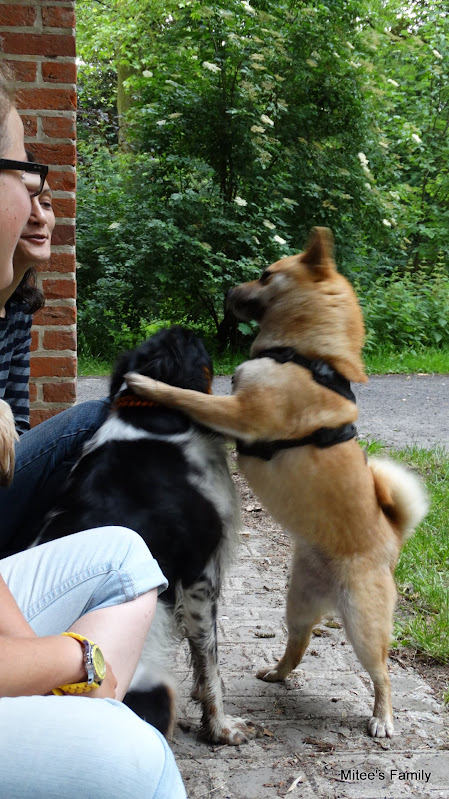 Balades canines en Nord (59)/Pas de Calais (62) - Boulogne-sur-Mer, Calais et Lille - Page 15 XCCWAiTCcEcRUJJD1THMZ-swOQMY1rGsNfo-ypwarwo=w487-h799-no