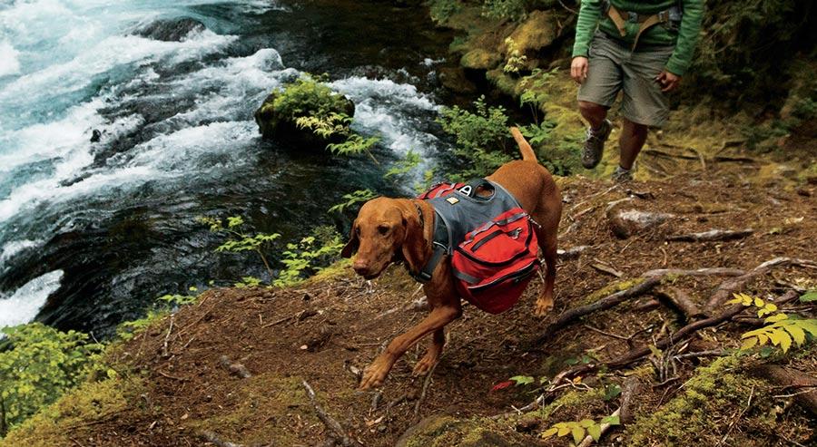 Image result for dog on hike