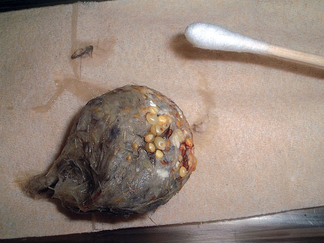 The seed and fibrous foreign material present within the crop have been removed