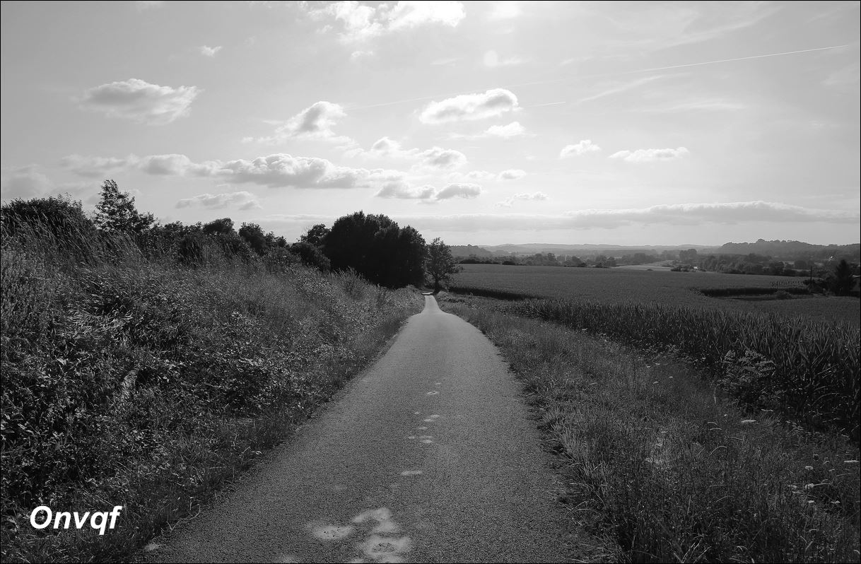 Balade à Sordes-l'Abbaye (88).JPG