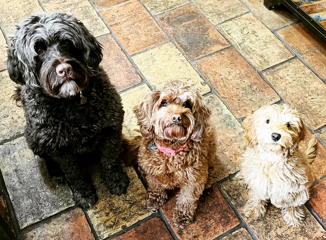 Three well-behaved dogs sit patiently on entryway tile.