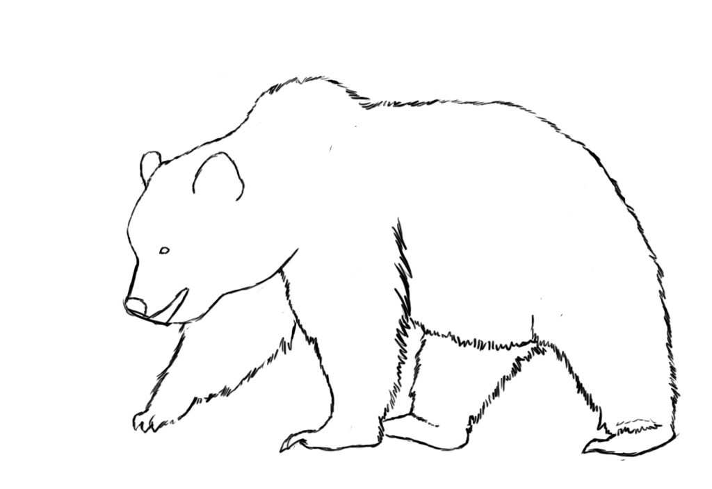 bear's body