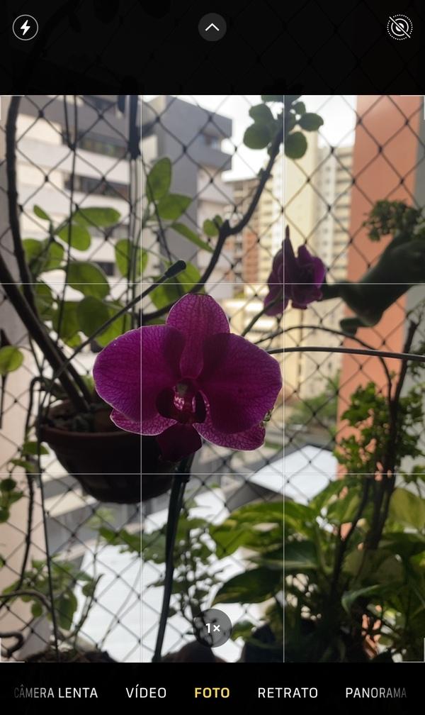foto de uma flor