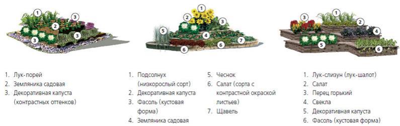 декоративный огород, Бордюр для огорода