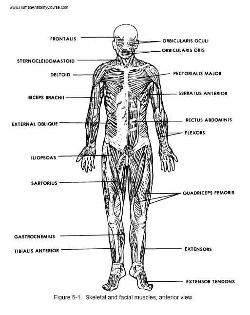Human Body 20
