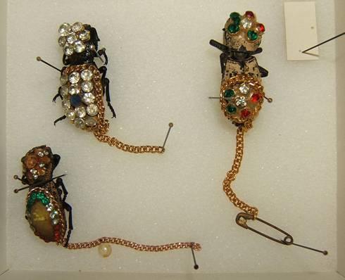 File:Zopheridae jewelry sjh.jpg