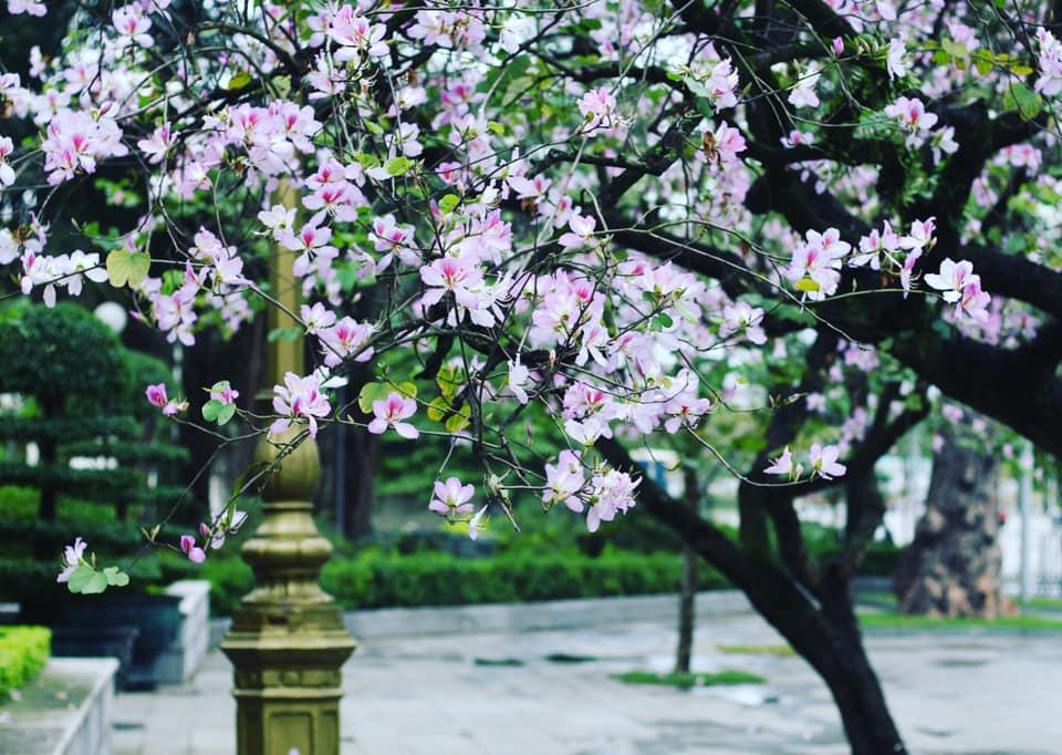 Trong hình ảnh có thể có: thực vật, cây, hoa, ngoài trời và thiên nhiên