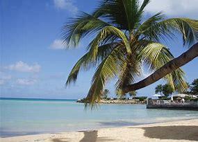 Obraz znaleziony dla: palmy