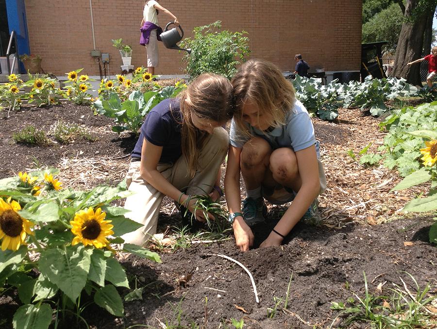 students garden.jpg