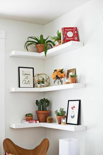 plantas prateleiras