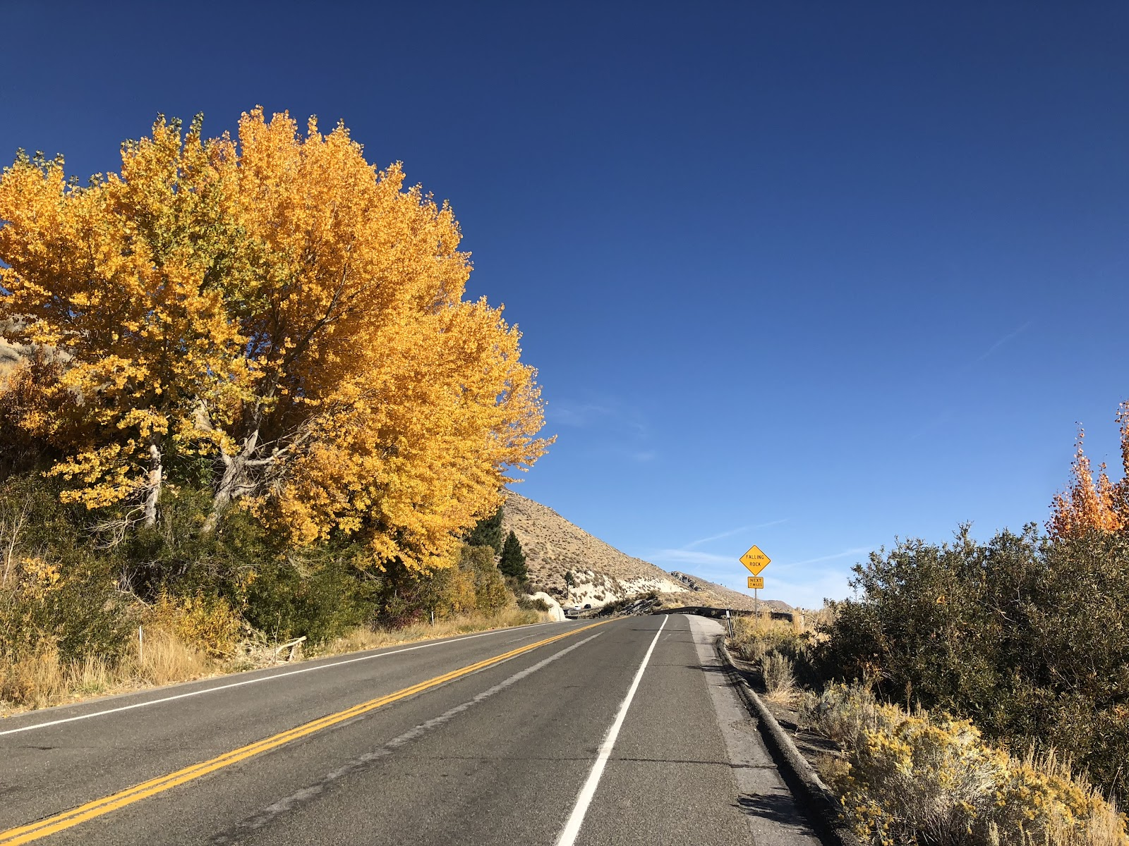 Fall colors on the Kingsbury Grade, Hwy 207