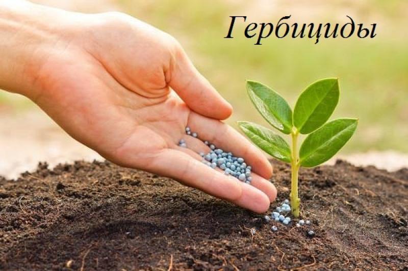 гербициды для подсолнечника