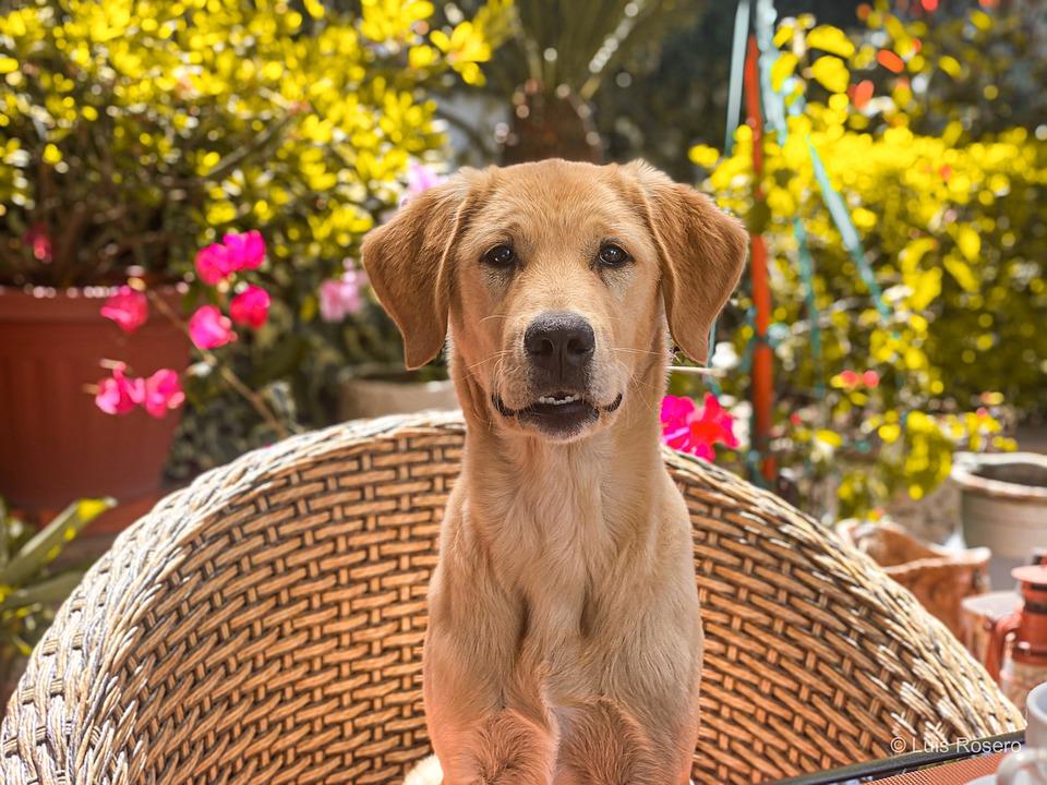 Est-ce que votre chien aime son panier ? Apprendre à rester dans son panier va permettre à votre chien de se créer un coin de refuge en cas de stress et d'angoisse intense. Pour vous c'est une occasion pour lui apprendre à rester dans son panier lorsque vous êtes en train de travailler ou bien lorsque vous recevez des invités à la maison.