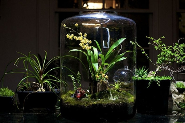 Тропический лес в бутылке