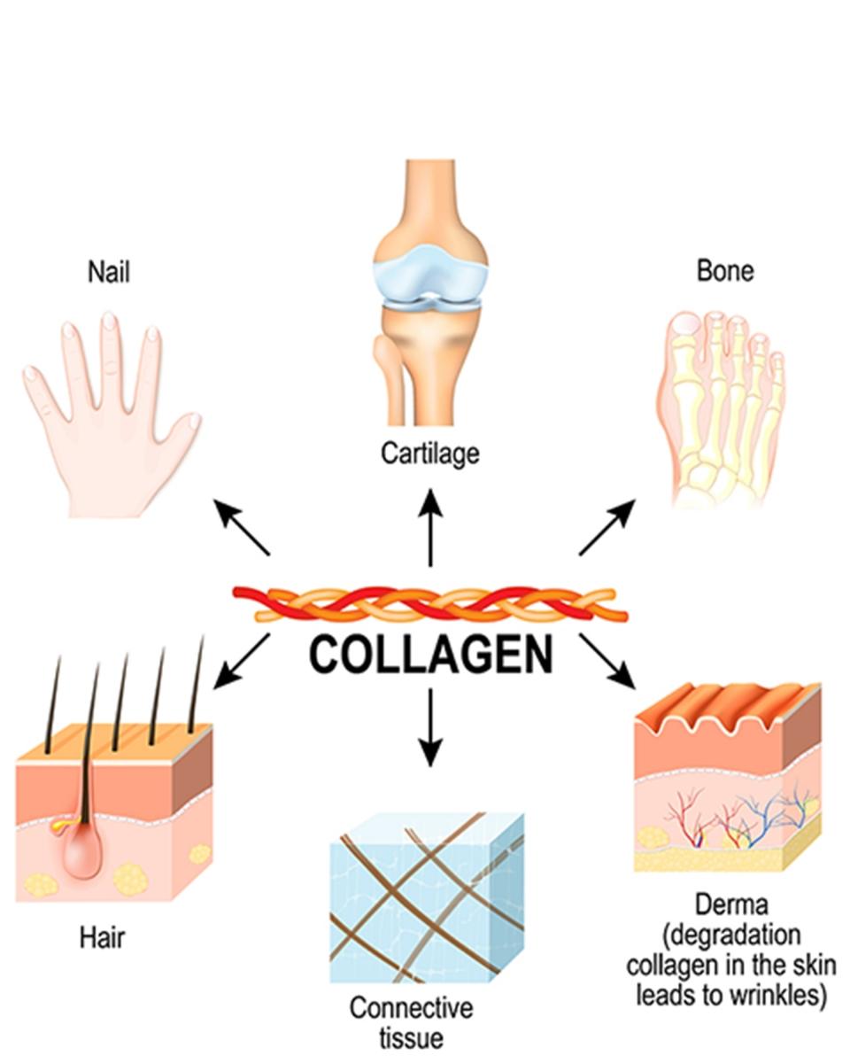 Rất nhiều tế bào, hệ cơ quan của cơ thể cần được bổ sung dưỡng chất này