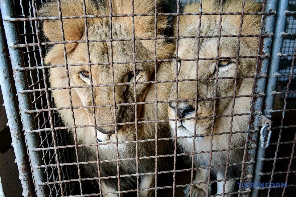Що чекає циркових тварин і їх дресирувальників в Україні? Репортаж