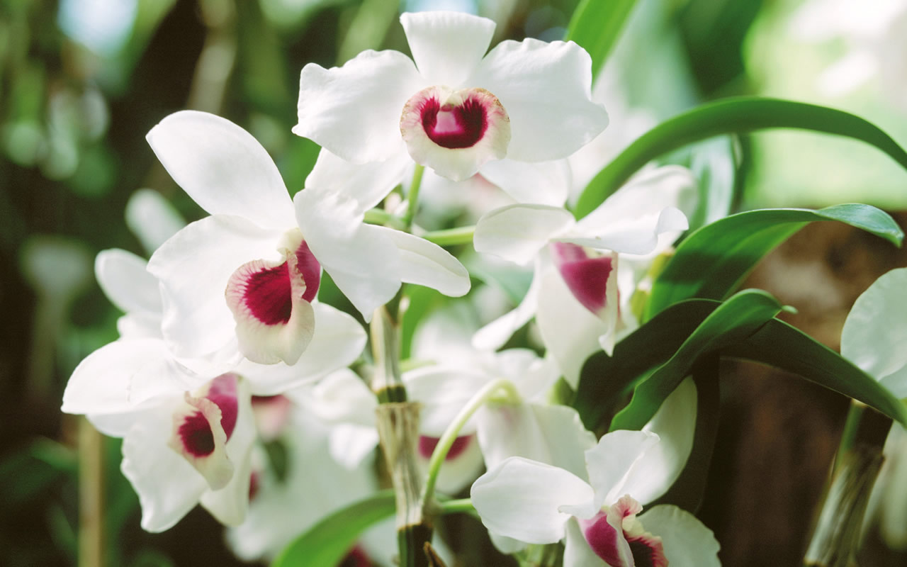 Orchids are the perfect companions that supports during spiritual breakthroughs